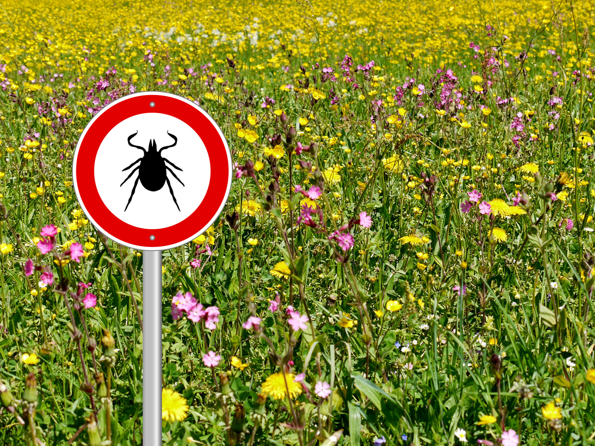 Why Would a Tick Cause Meat Allergies?